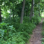Scenic Byway Trail Easements